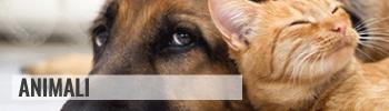 homepage-animali